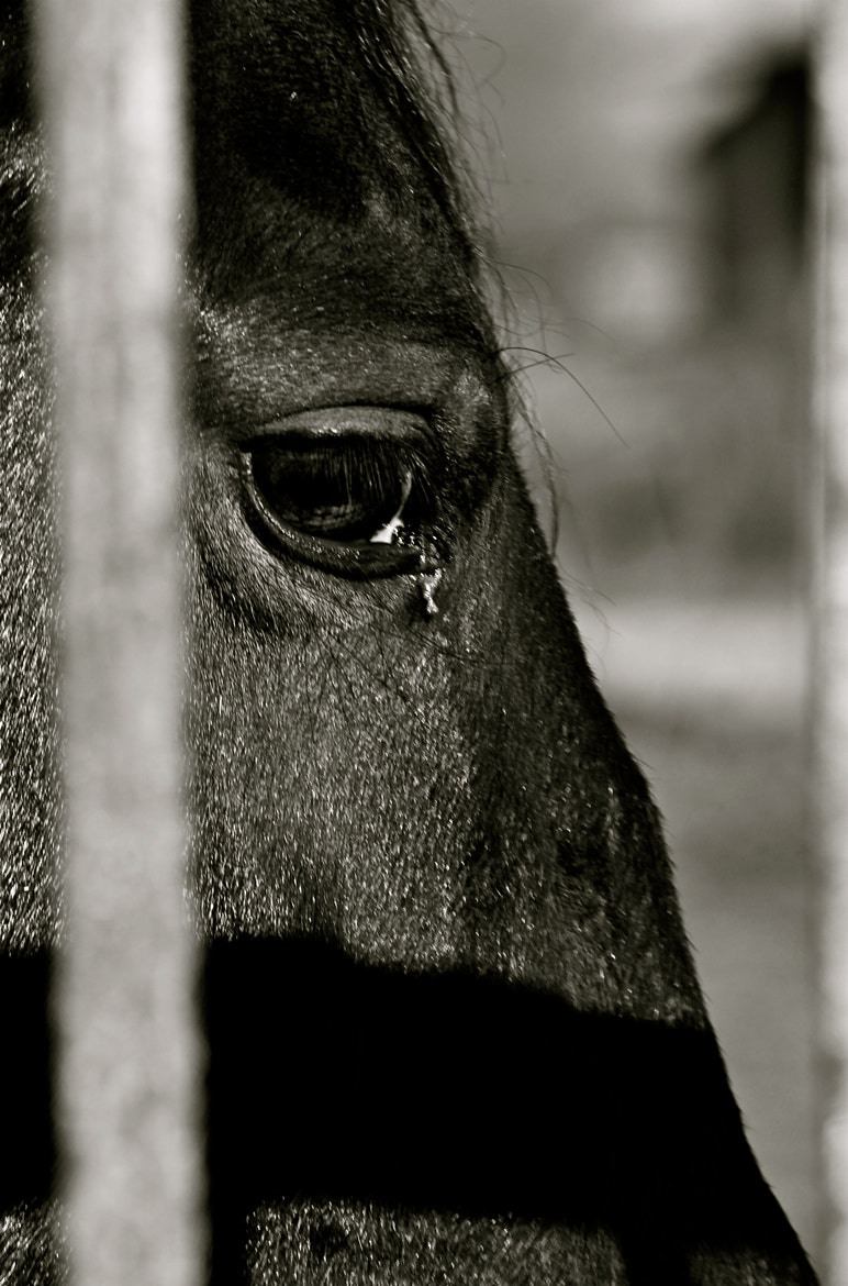 Photograph Horse by Silvia Sabbadini on 500px