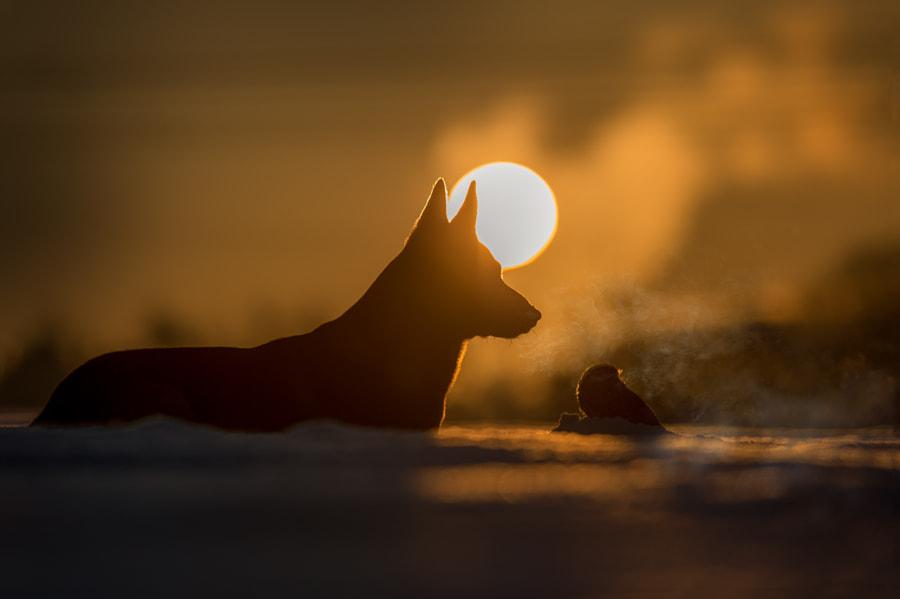 Light by Tanja Brandt on 500px.com