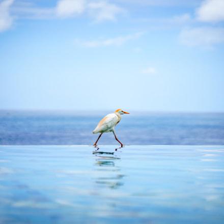 Bird Zen