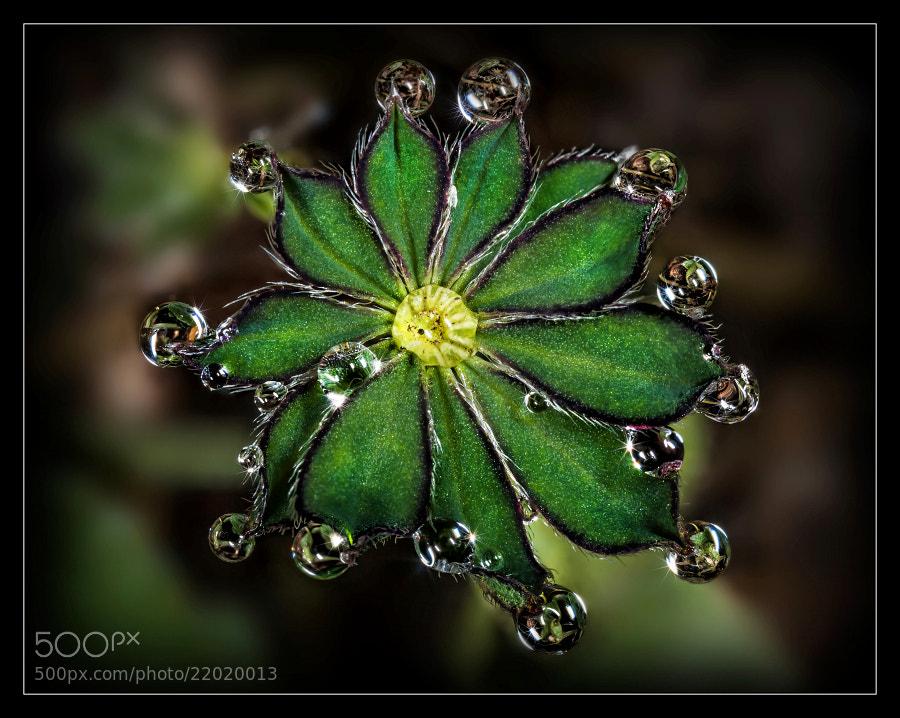 Photograph Green by Jaroslava Melicharová on 500px
