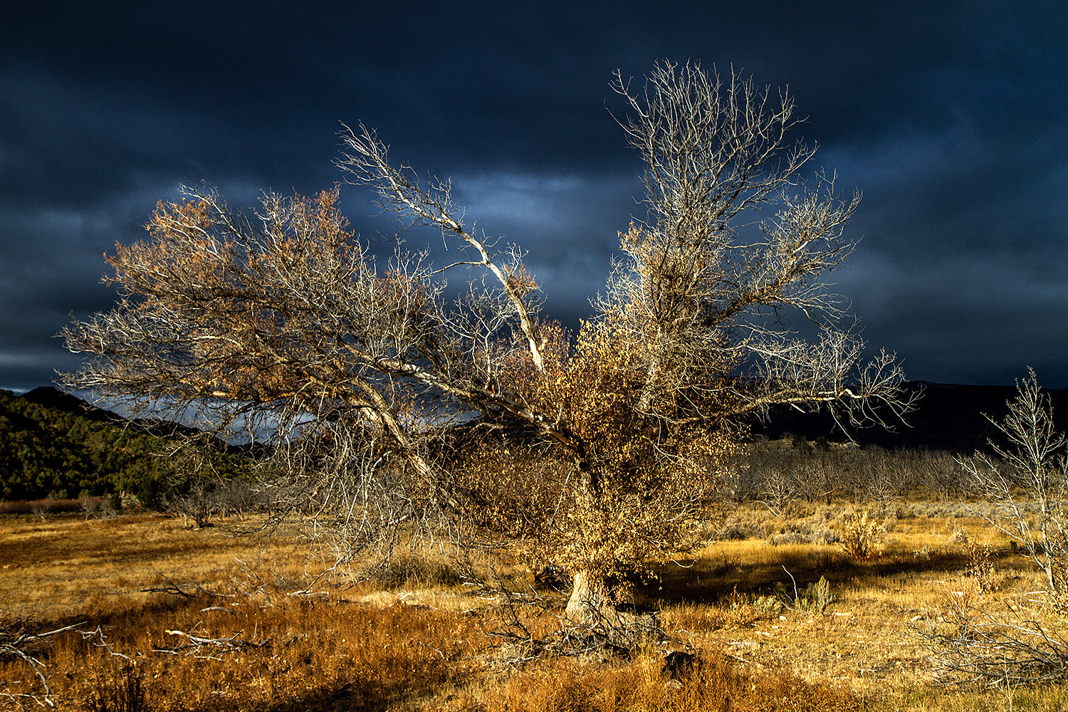 Photograph Dramatic Tree Idaho by For 91 Days on 500px