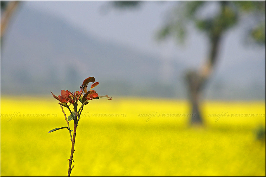 Photograph The Solo Beauty...!! by Navojit Bhuyan on 500px