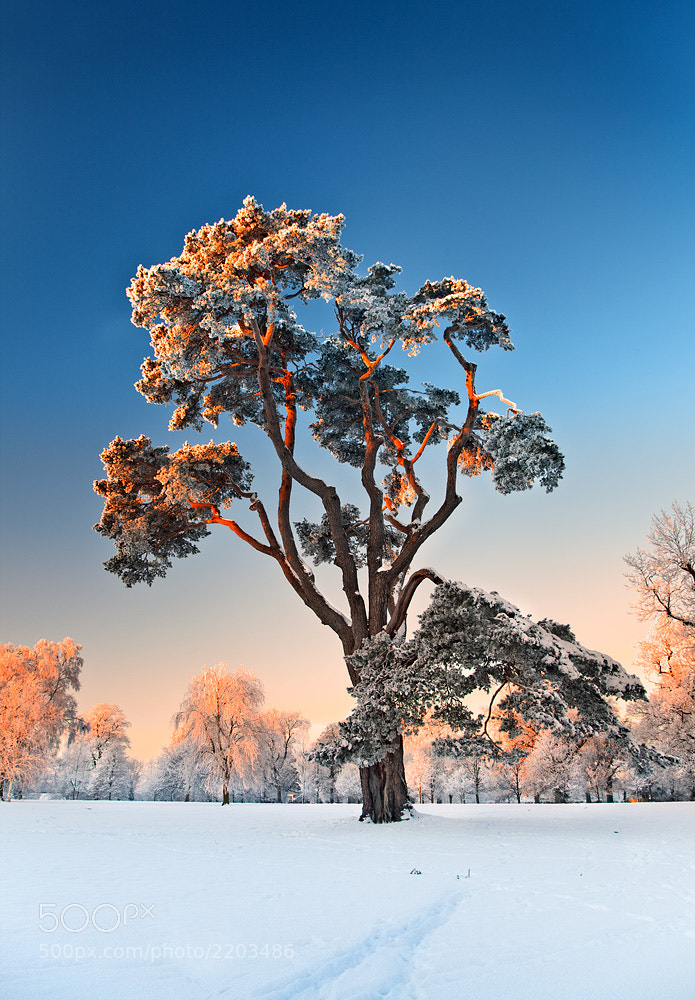 Photograph Winter Beauty by Stephen Emerson on 500px