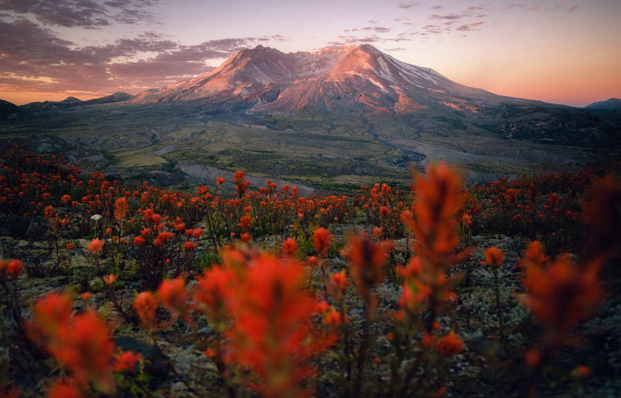 A Bee's Eye View by Nathaniel Merz on 500px.com