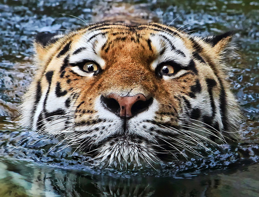 Photograph Life of Pi by Klaus Wiese on 500px