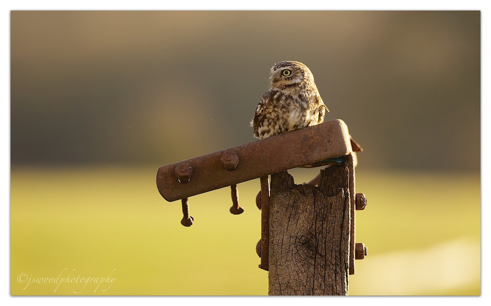 Photograph New Year Little Owl by Jason Wood on 500px