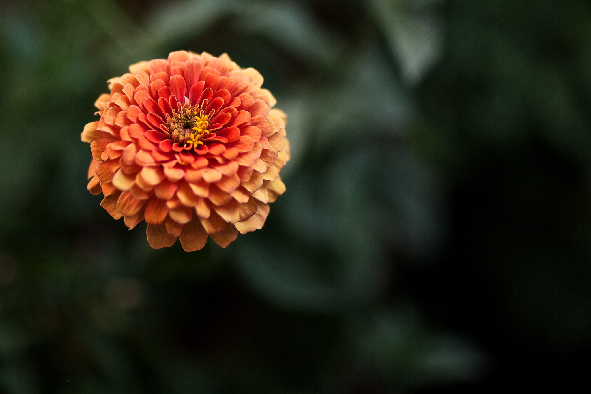 Photograph Floating Flower by Rahul Matthan on 500px