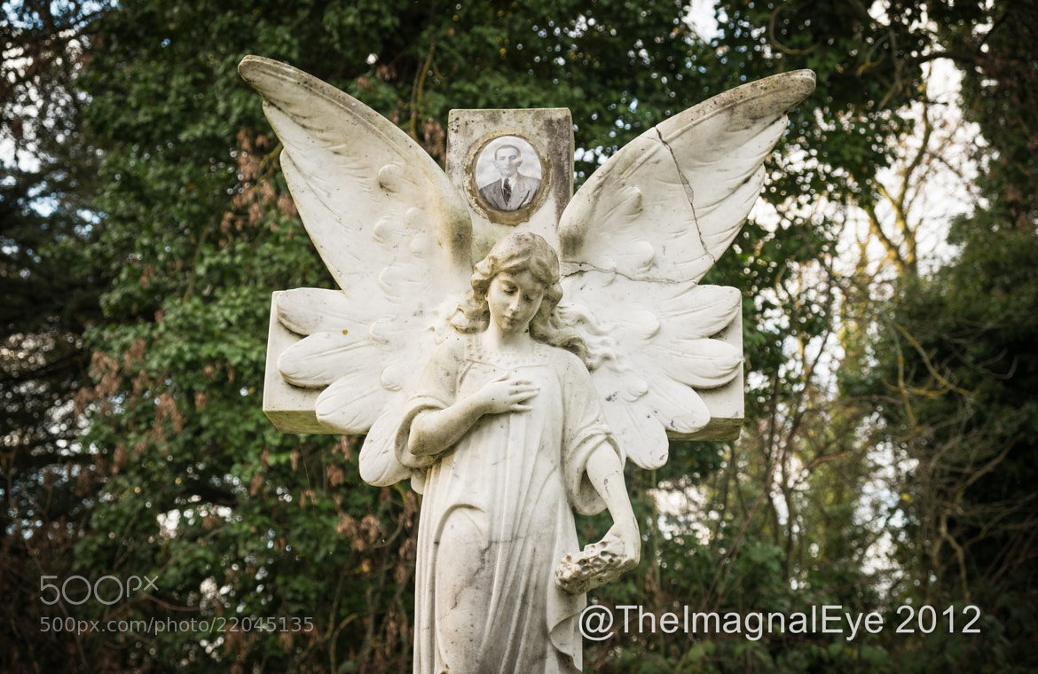 Photograph West Norwood Cemetery, London by Pip Eastop on 500px