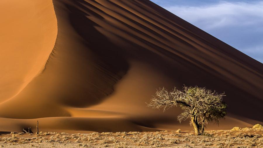 Dune 45. Sossusvlei by Xenia Ivanoff-Erb on 500px.com