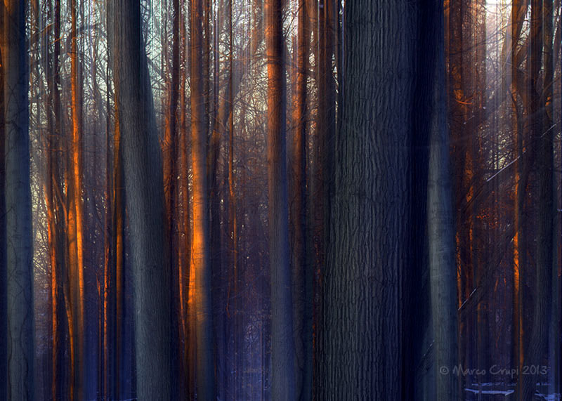 Photograph Winter Woods by Marco Crupi on 500px