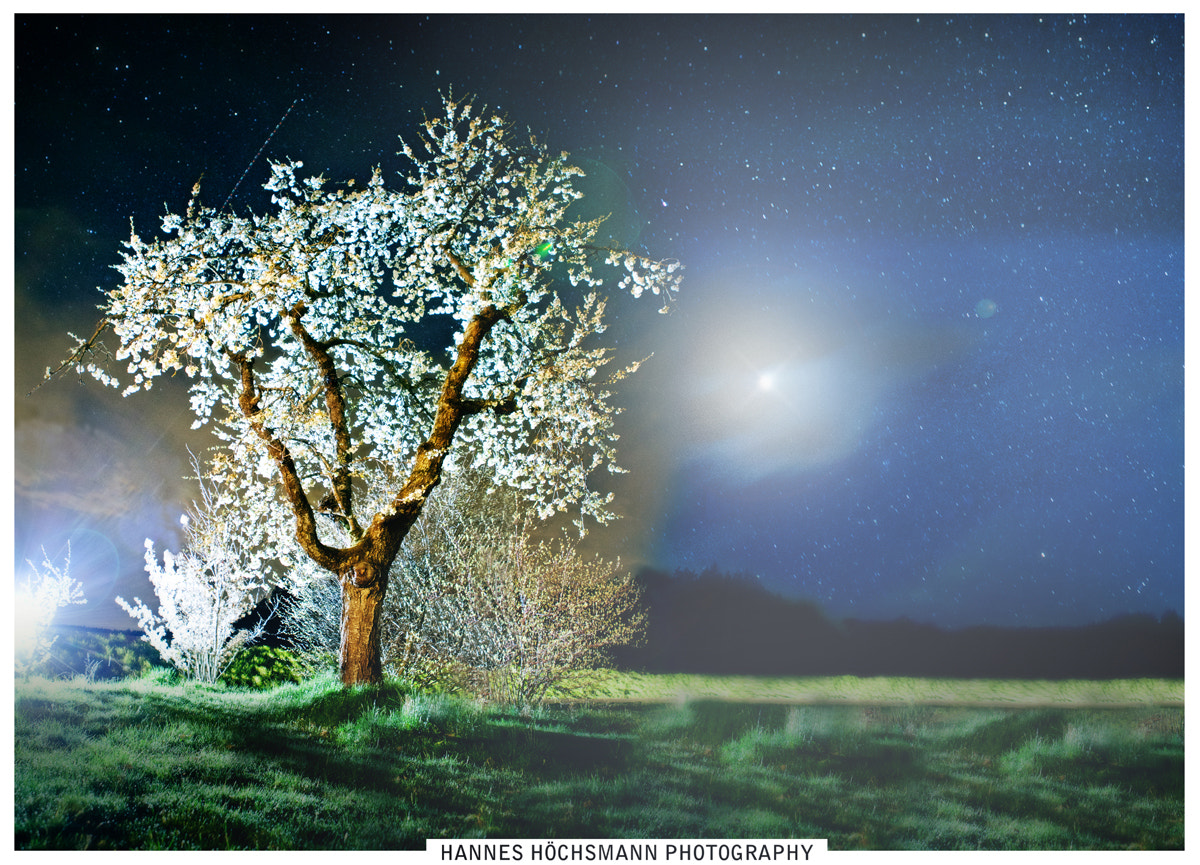 Photograph A TREE IN THE NIGHT by Hannes Höchsmann on 500px