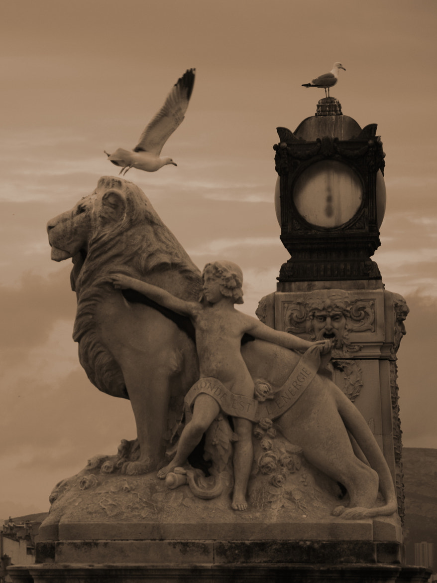 Photograph The Lion and the Seagull by Christophe R on 500px