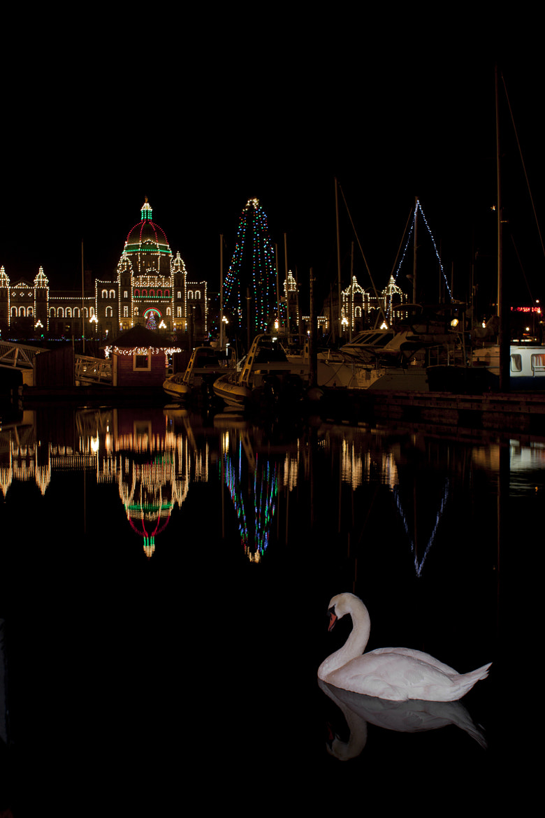 Photograph New Years Swan-o-lution by Andrew Cameron on 500px