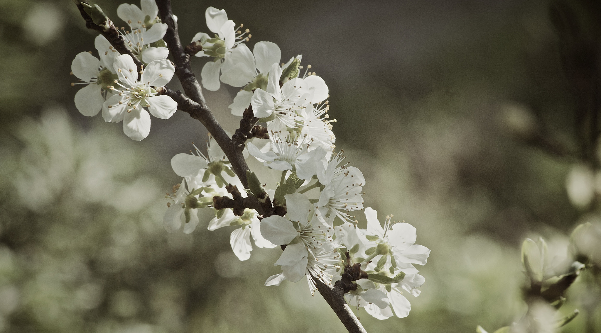 Photograph Tree Flowers by Simon (Rufux) on 500px