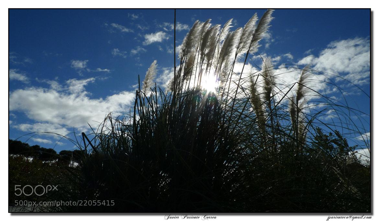 Photograph Wind light by Javier Pariente Correa on 500px