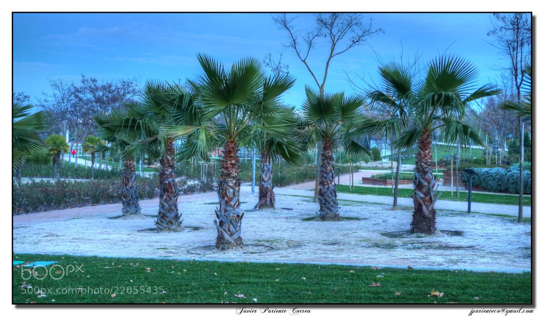 Photograph Palm  by Javier Pariente Correa on 500px