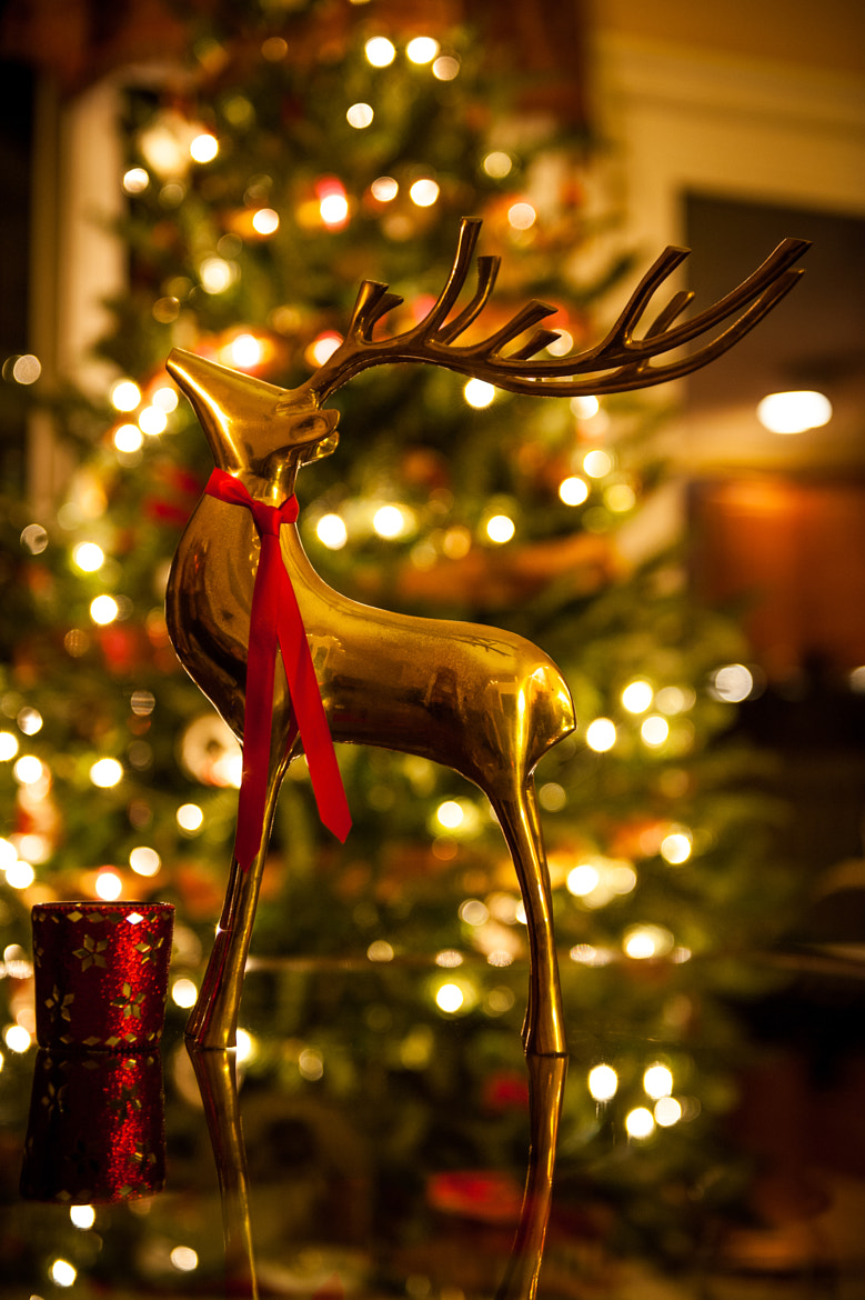 Photograph Christmas Reindeer by Rolf Quander on 500px
