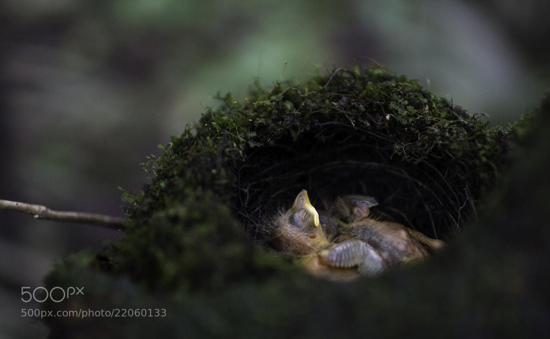 Photograph ///// Sleeping by Vian Esterhuizen on 500px