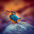 Baby Kingfisher