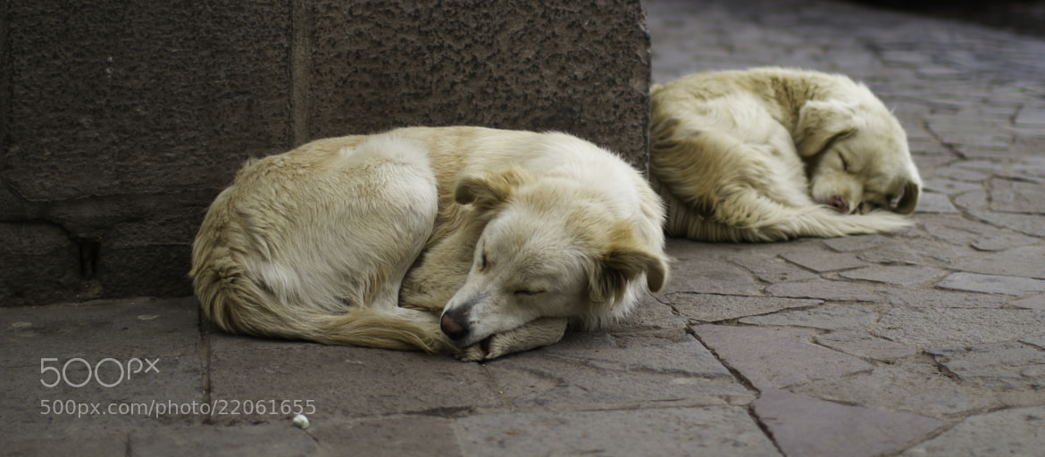 Photograph ///// Two Asleep by Vian Esterhuizen on 500px