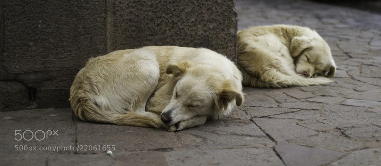 Photograph ///// Two Asleep by Vian Esterhuizen on 500px