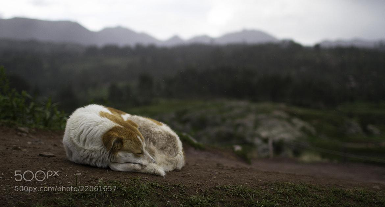 Photograph ///// Sacsayhuamán Sleeping by Vian Esterhuizen on 500px