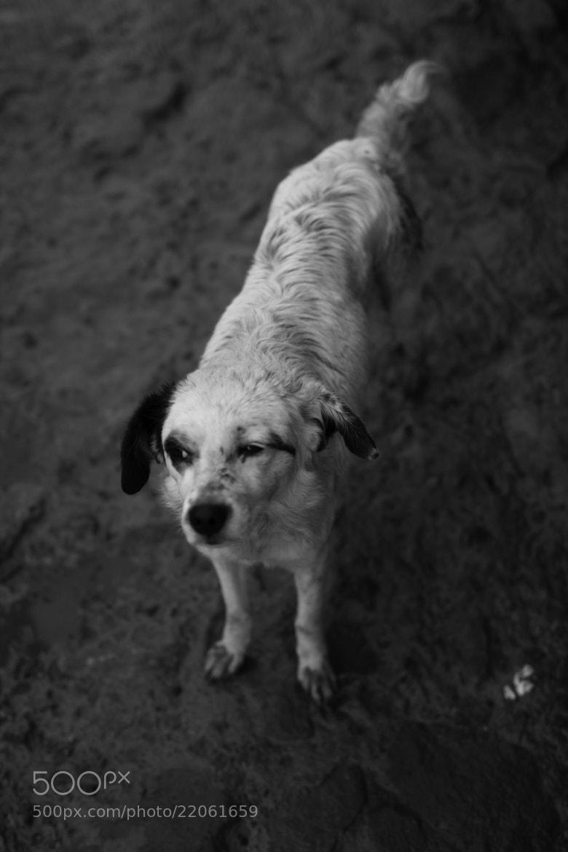 Photograph ///// Sad by Vian Esterhuizen on 500px