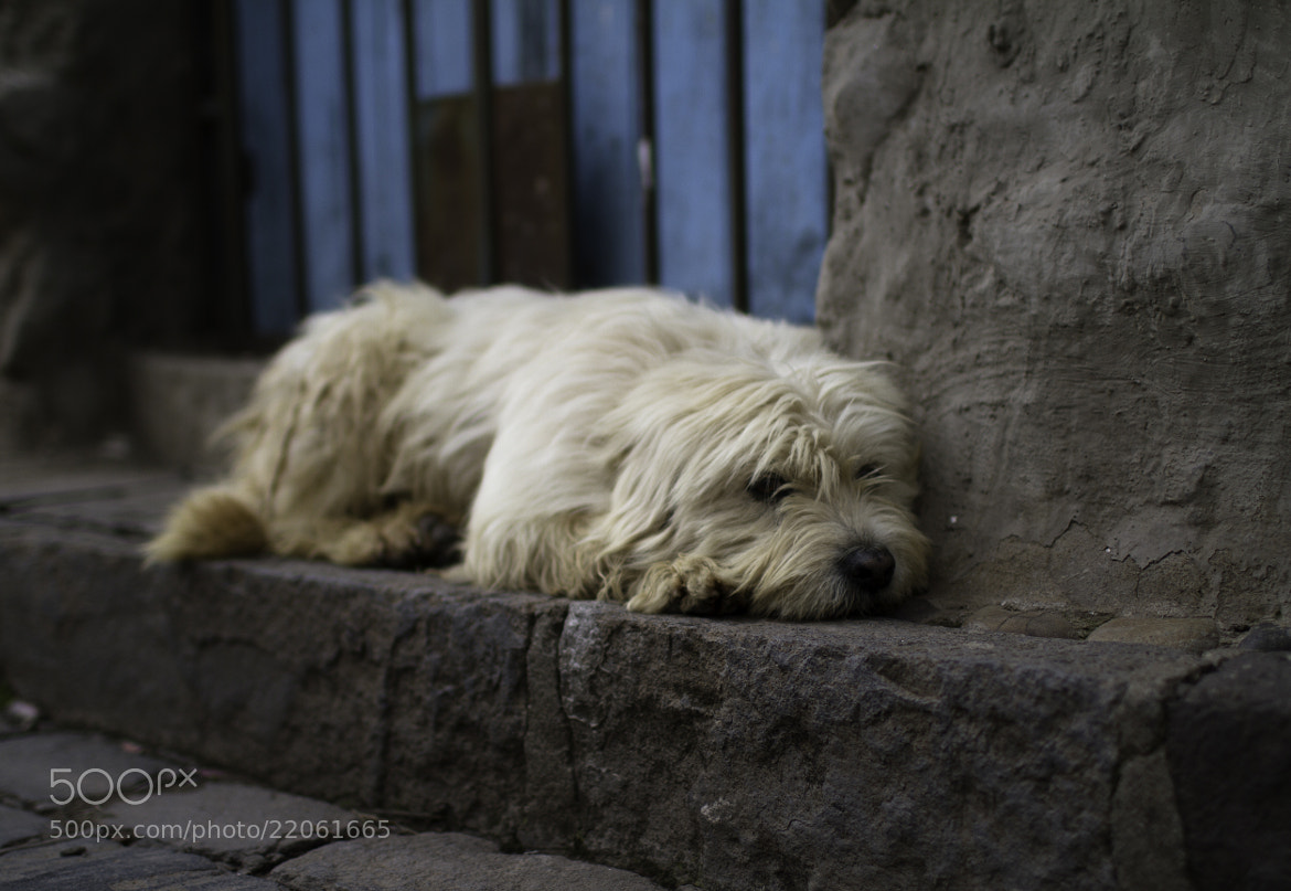 Photograph ///// Lonely in Cusco by Vian Esterhuizen on 500px