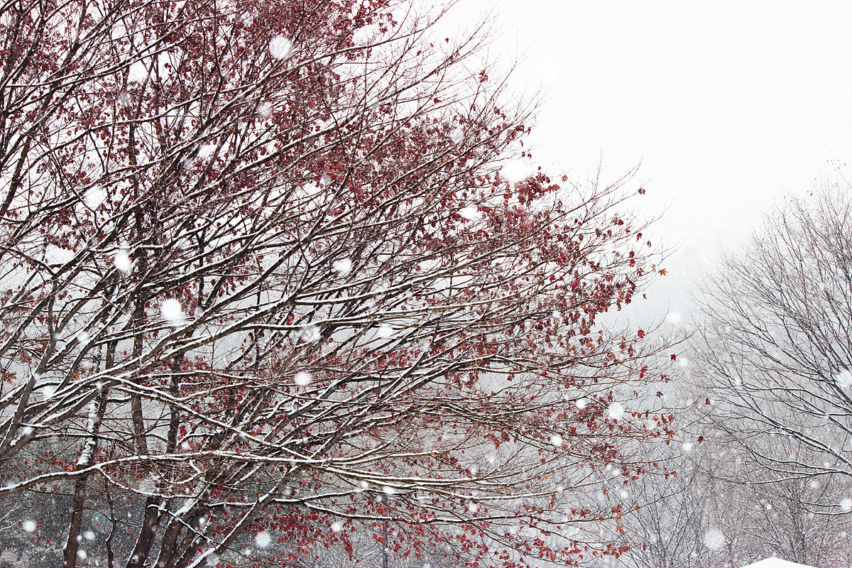 Photograph Snowing by TY Kim on 500px
