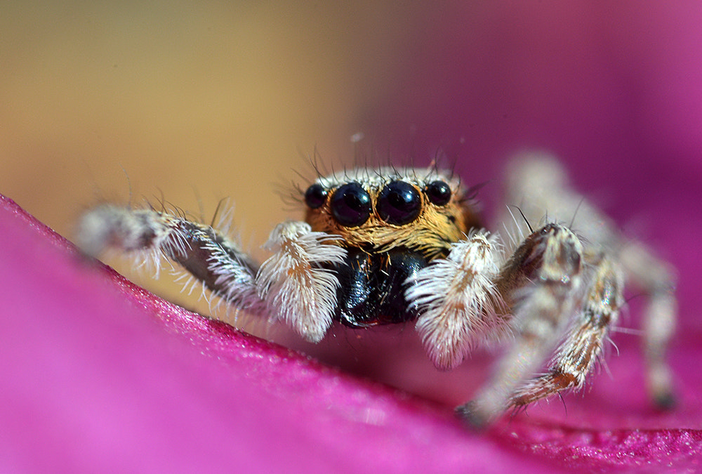 Photograph Itsy bitsy spider by Pablo Buitrago on 500px