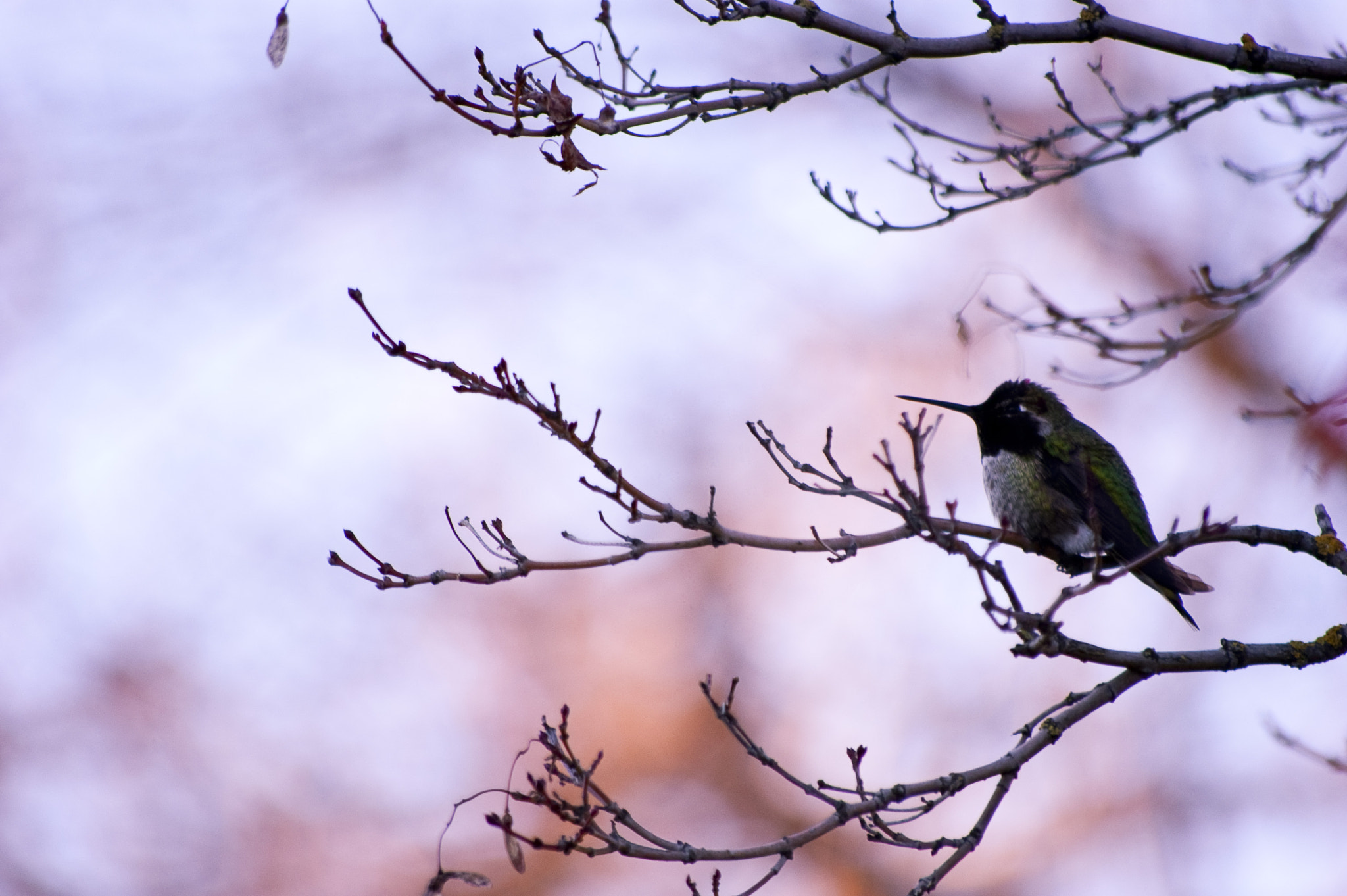 Photograph Humming in Winter by Richard Michael Johnson on 500px