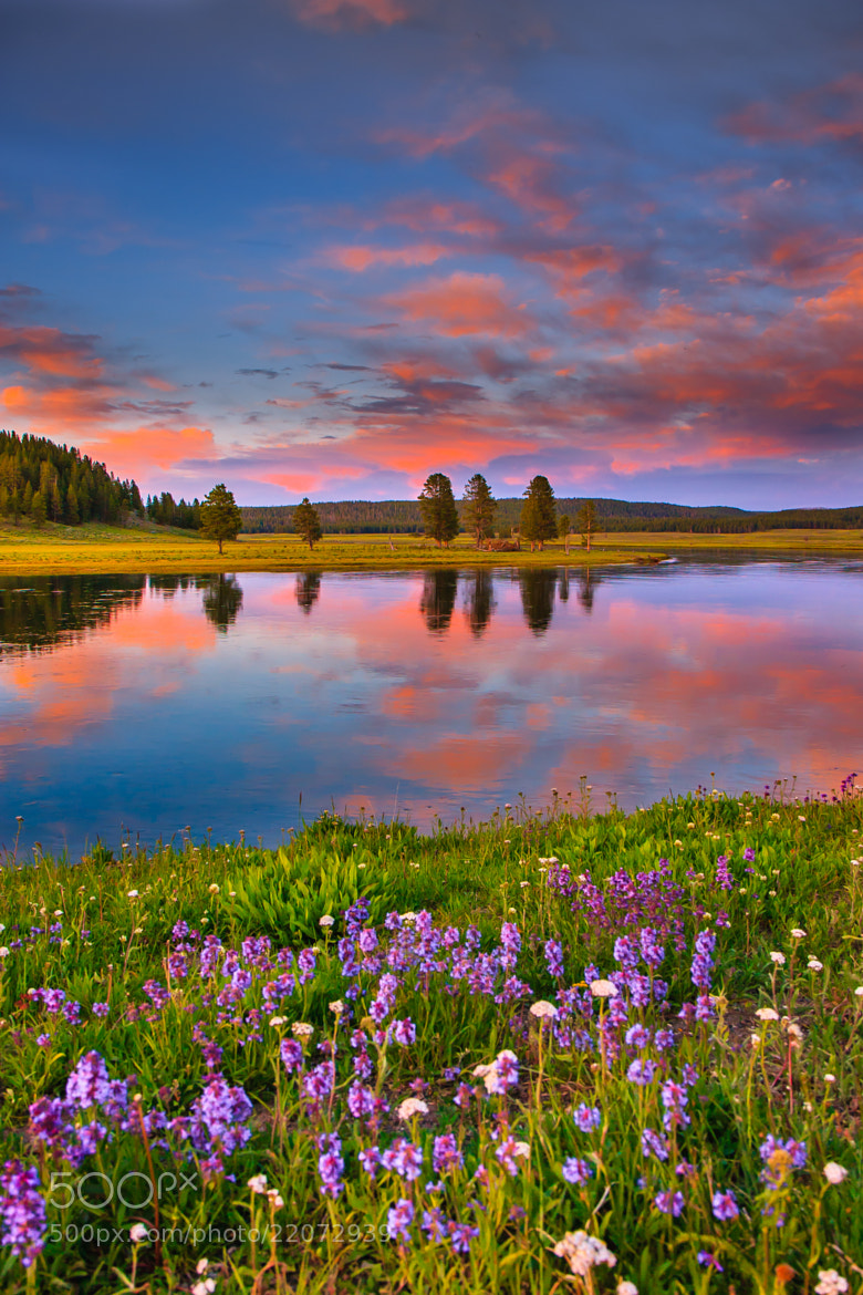 Photograph Beautiful sunset in Hayden valley,Yellowstone by Shikha S on 500px
