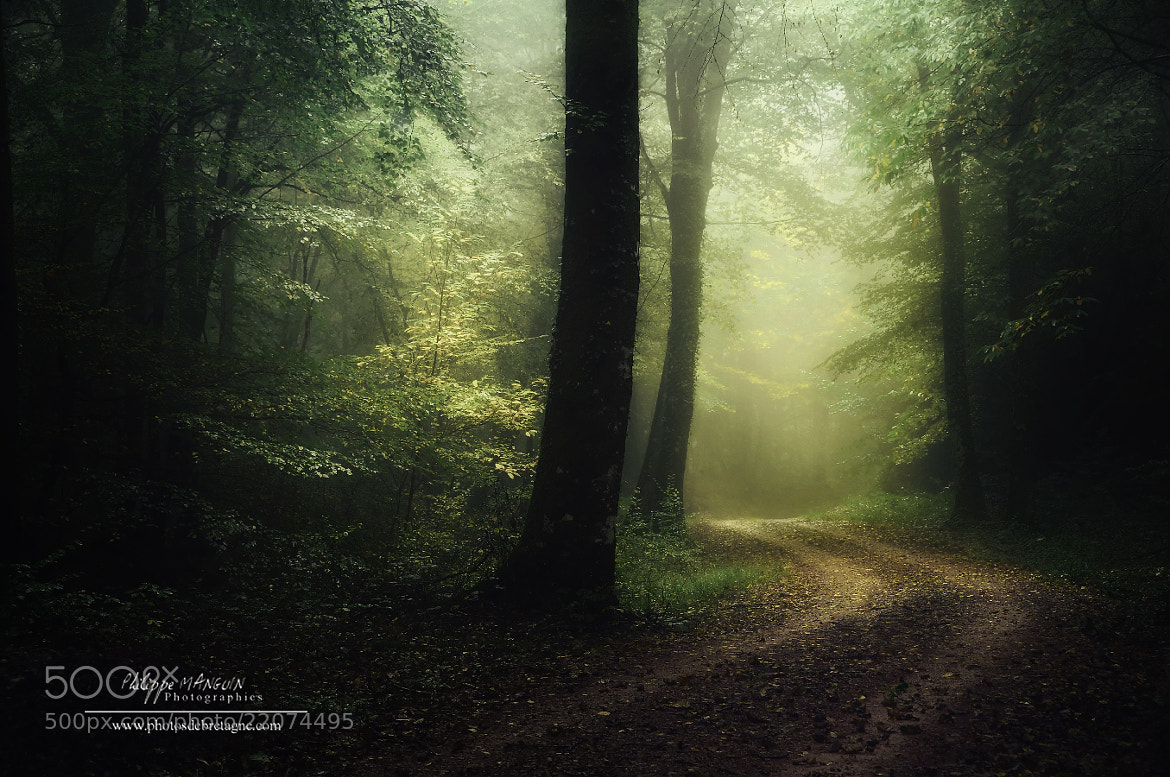 Photograph BROCELIANDE - Fear by Philippe MANGUIN on 500px