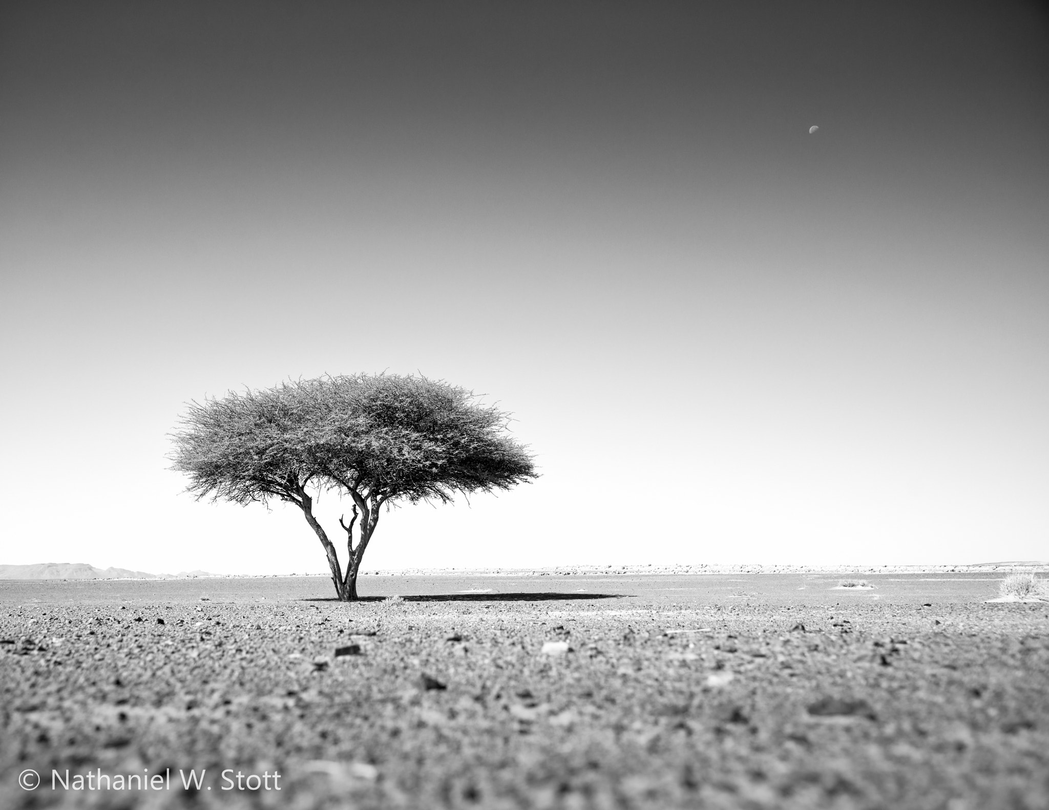Photograph Shade Tree by Nathaniel Stott on 500px
