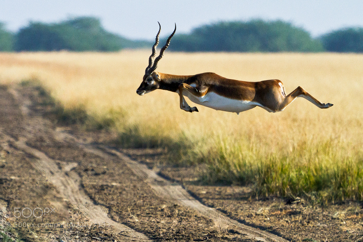 Photograph Sprint..... by ANUP SANE on 500px