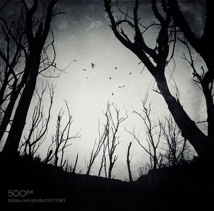 Photograph Alarmist birds... II. by Heaven Man on 500px