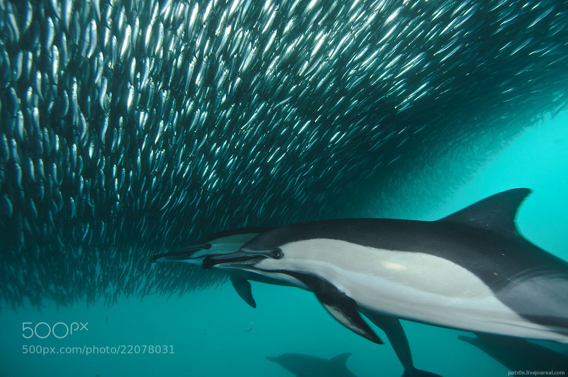 Photograph sardine wars ep. VI by Alexander Safonov on 500px