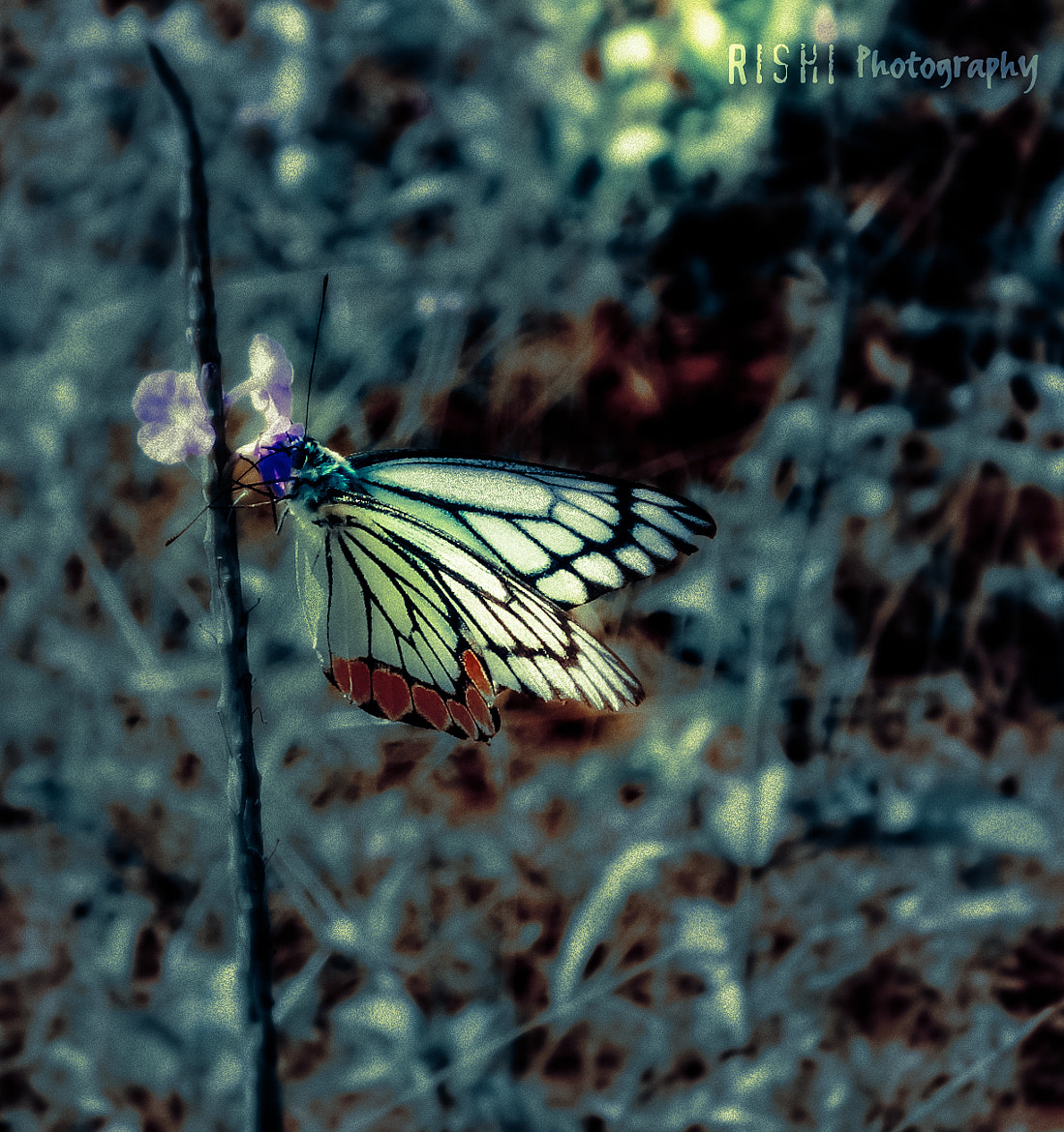 Photograph Beauty-Butterfly by Rishikeshan Pangushan on 500px
