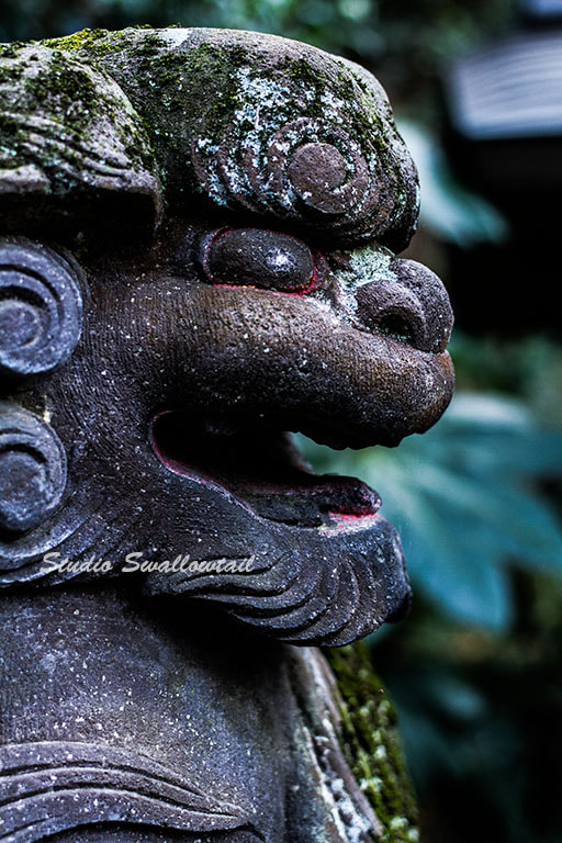 Photograph Guardian lion-dog at Shinto shrine by fuu jin on 500px