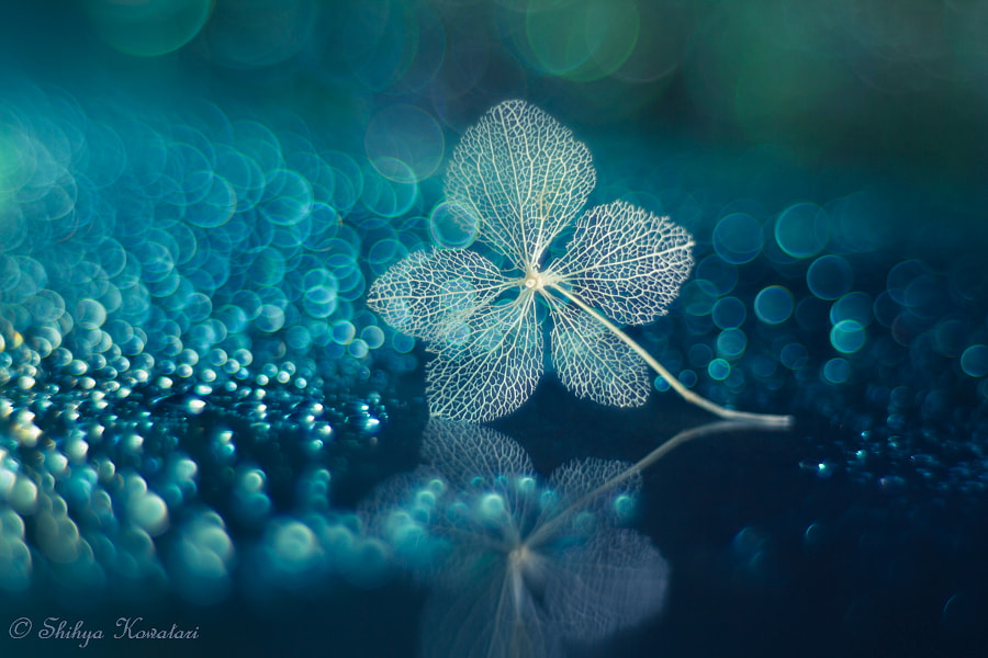 Serenade in Blue by Shihya Kowatari on 500px