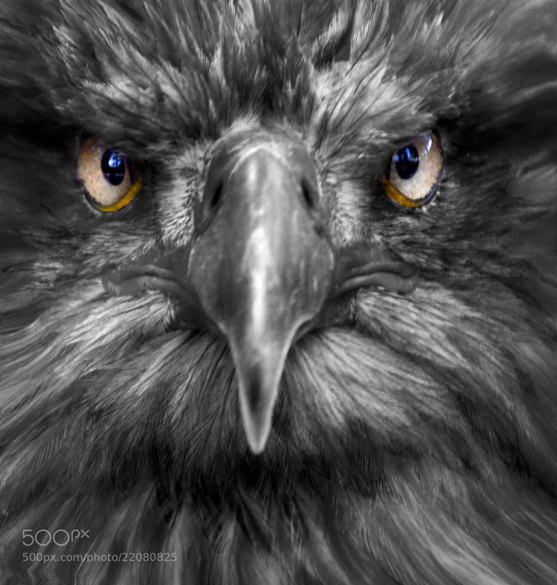 Photograph Impressive eyes. by Duilio Pianelli on 500px