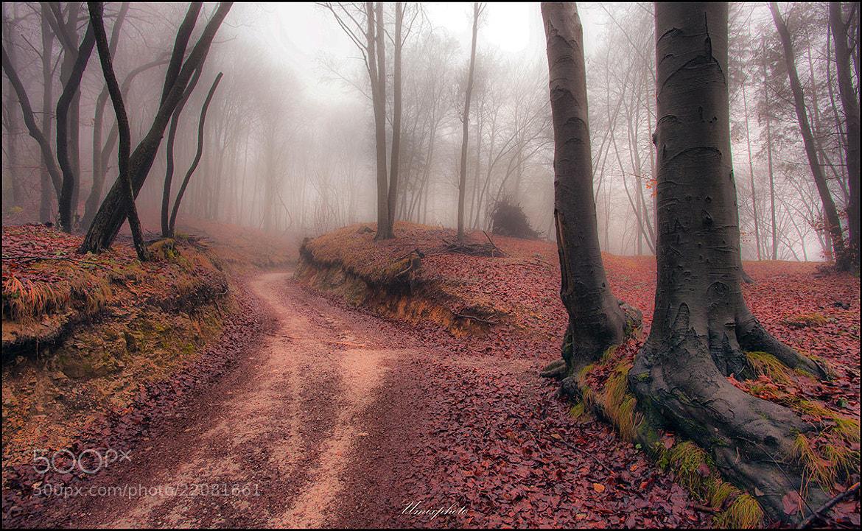 Photograph Mystic Road by Jaro Miščevič on 500px