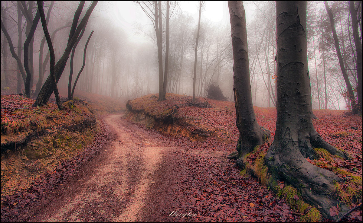 Photograph Mystic Road by Jaro Miščevič on 500px