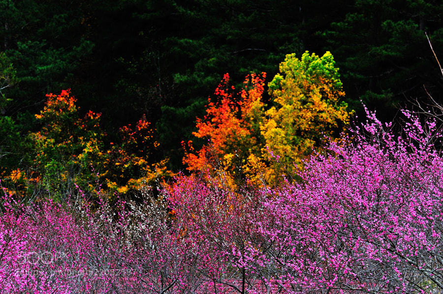 Photograph Colors by taya liu on 500px