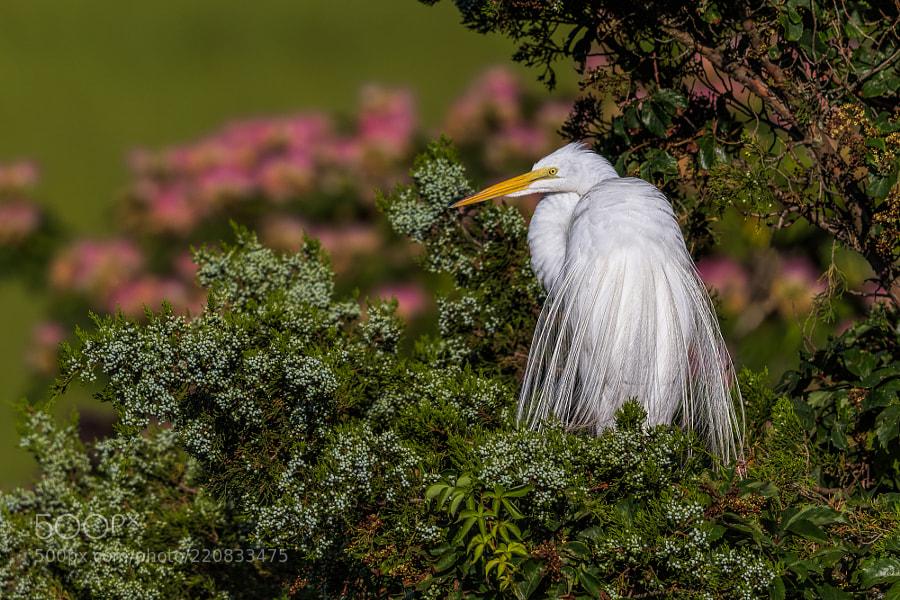 White egret flower stock photos 500px white wedding egret mightylinksfo