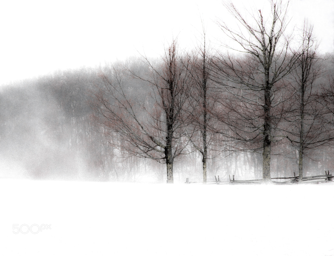 Photograph Whiteout by Greg Padgett on 500px