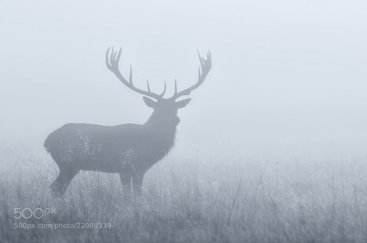 Photograph powderblue by Mark Bridger on 500px