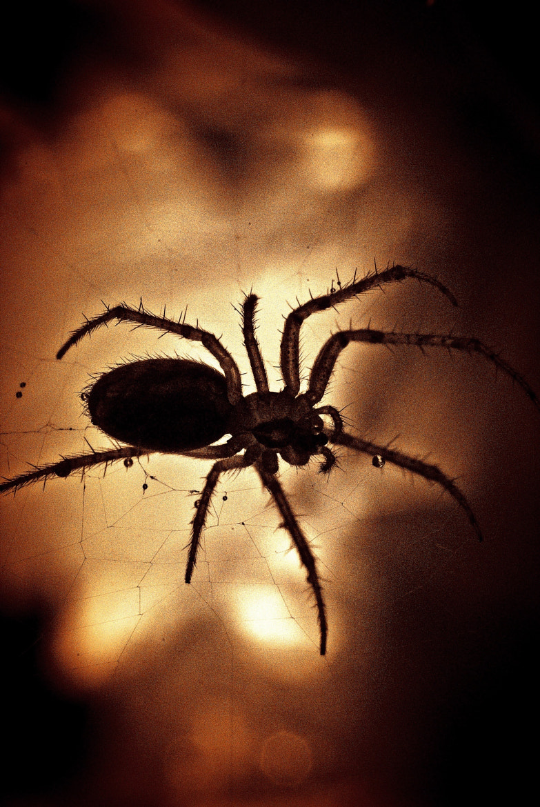 Photograph Sunset Spider by Mwaniki Will on 500px
