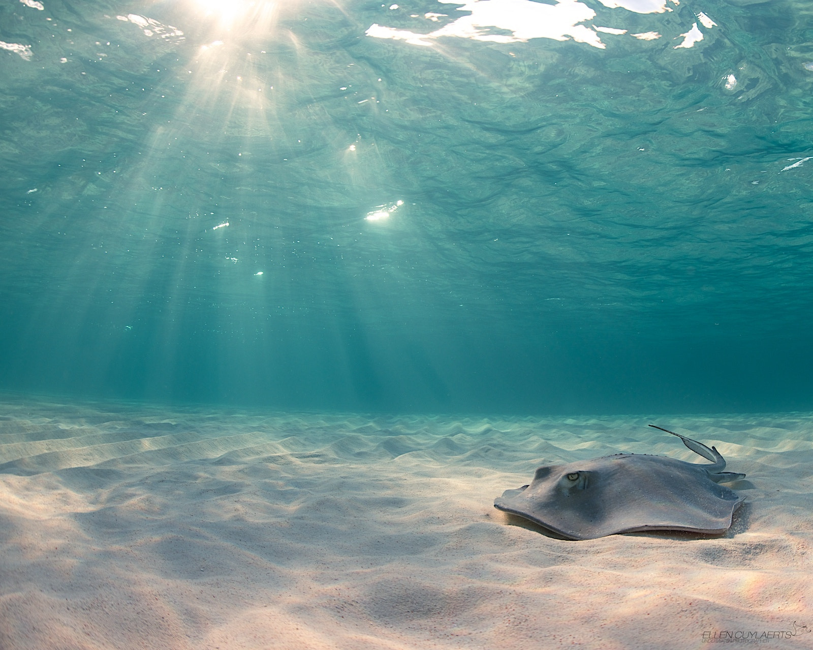 Photograph Rays of light! by Ellen Cuylaerts on 500px
