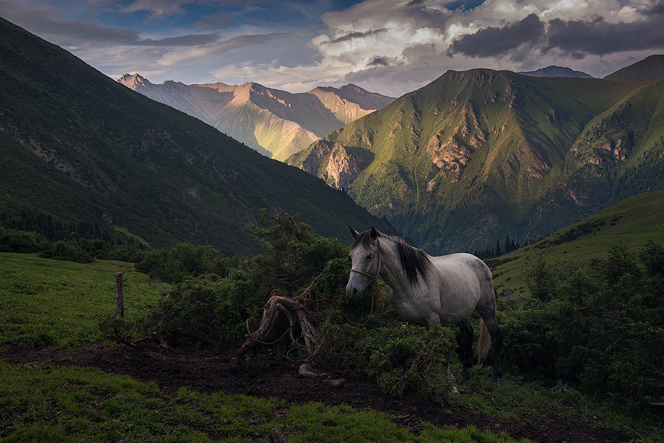 Photograph White horse by Daniel Kordan on 500px